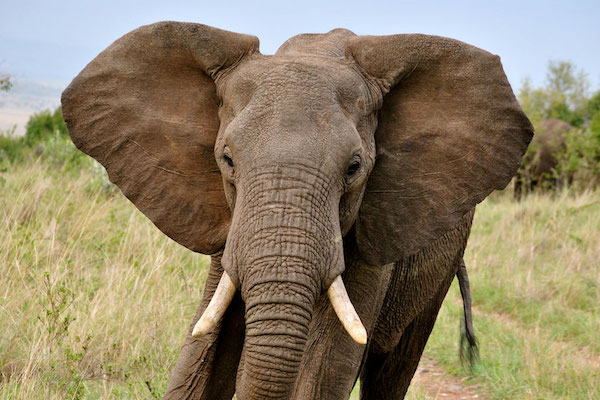 Elephants are typically a very gentle and peaceful animal.